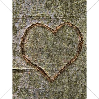Heart-carved-in-tree-trunk